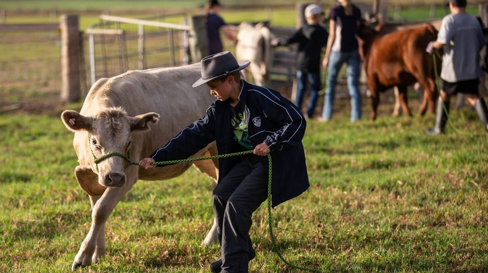 student with steer