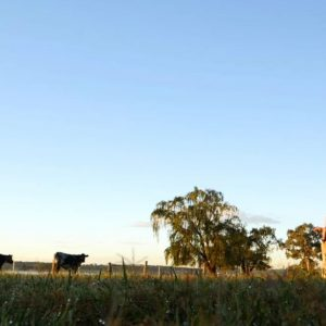 Student and teacher on school farm looking at cattle